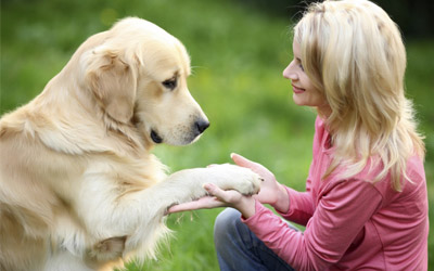 Effective Tips To Increase Your Furry Friend's Life