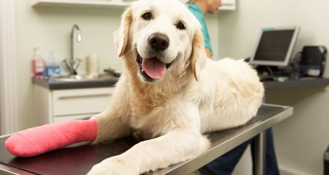 Going For A Pet Surgery? Adopt These 3 Caring Tips