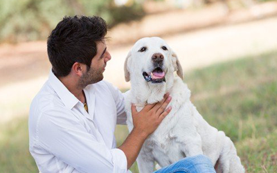 5 Reasons Why You Should Adopt A Senior Pet
